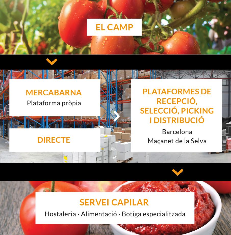 Distribución de Fruta y Verdura